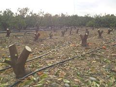 2014.2.5伐採