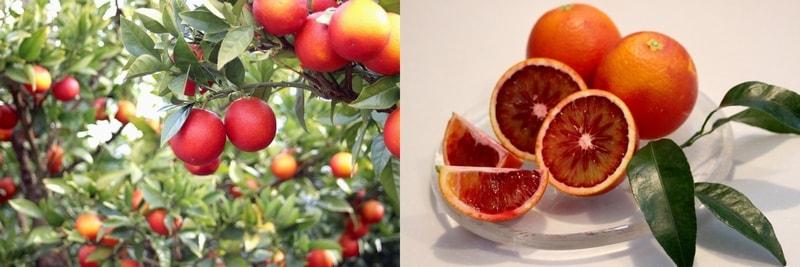 北東農園Online Shop ブラッドオレンジ「モロ」