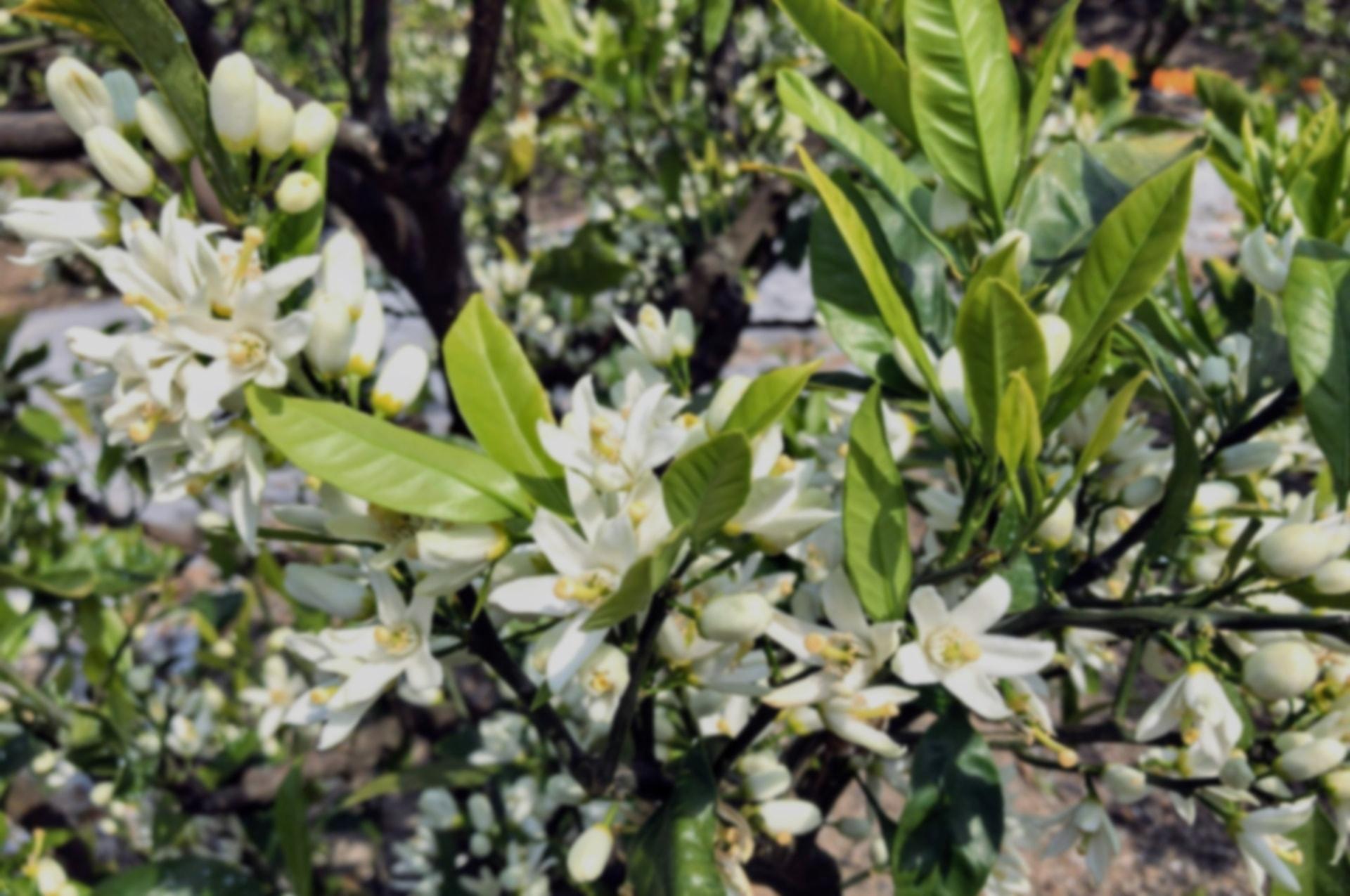 みかんの種類と栽培方法について